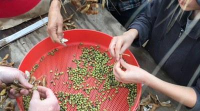 Harvesting Seeds Workshop and Seed Swap