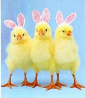 Bunny chicks